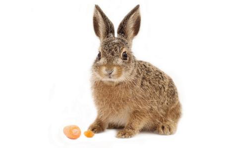 兔子,胡萝卜