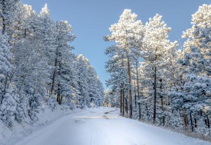 雪,科罗拉多州,树木,冬季,性质