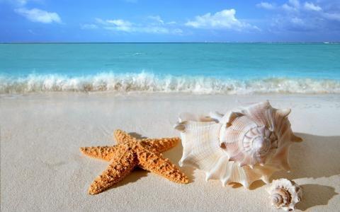 海,壳,星,沙,天空