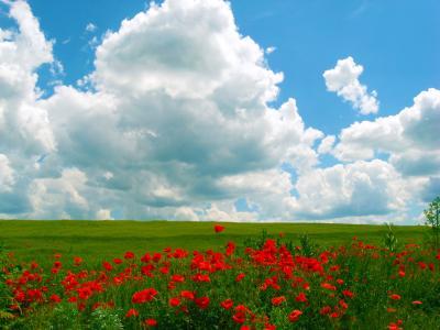 罂粟,蓝天