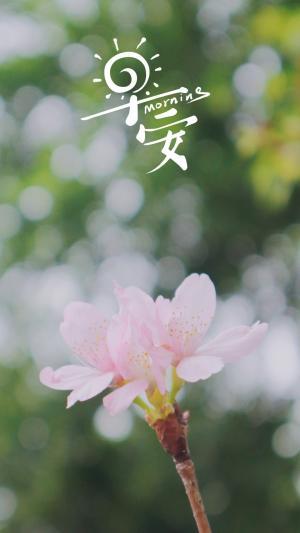 小清新早安花朵