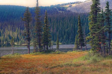 山脉,河流,树木,景观