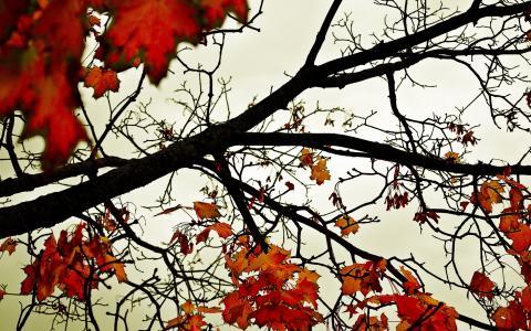 的,秋季,壁纸