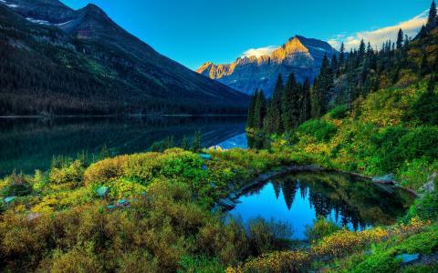 湖泊,树林