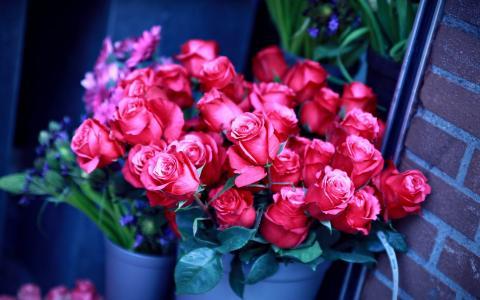 玫瑰,红色,花束,桶