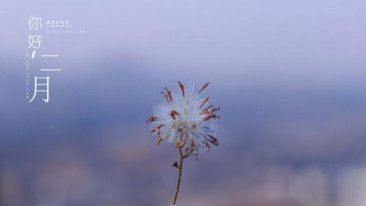 二月你好小清新植物摄影