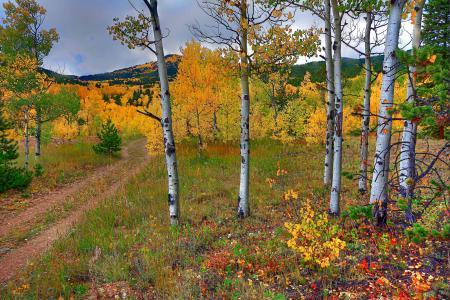 秋天,树木,路,山,景观