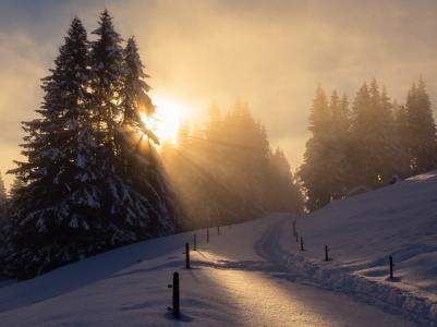 自然,树木,雪,路径,房屋,太阳,冬天,日落,景观