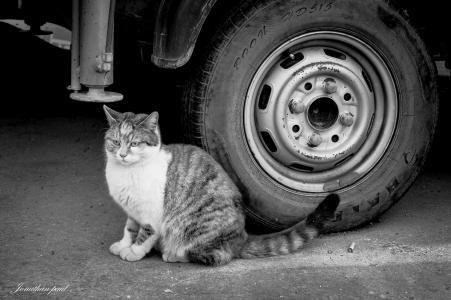 眼睛,背景,猫,猫,看,黑色和白色,轮,眼睛,背景,猫,看,黑与白,whee