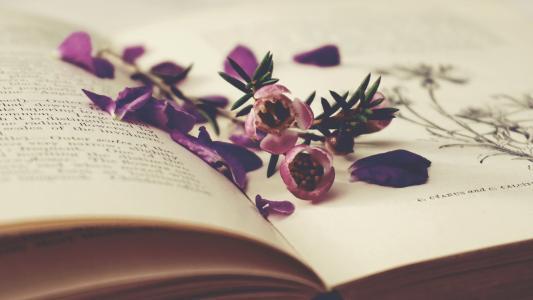 书本上的小紫花唯美意境