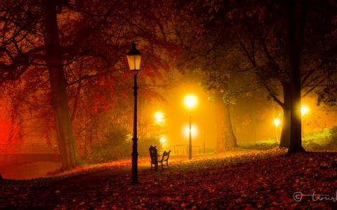 公园,秋季,光,暮光之城,灯,晚上