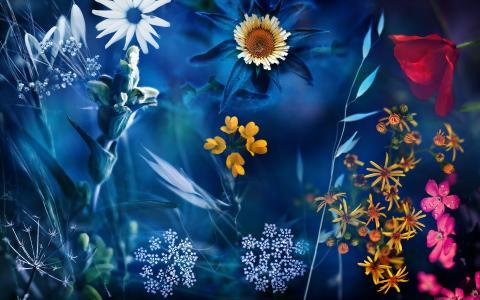 鲜花,自然,蒙太奇