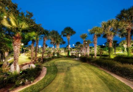 公园,美国,加利福尼亚州,黄石,草,草坪,棕榈树