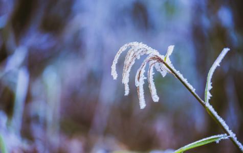 冬季时节结冰植物自然景色