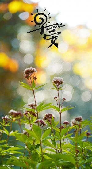 早安,清晨花朵