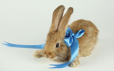 蓝色的弓,兔子