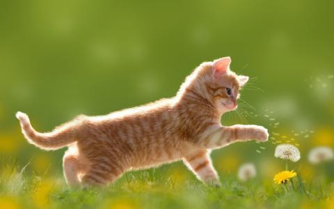 红发,小猫。