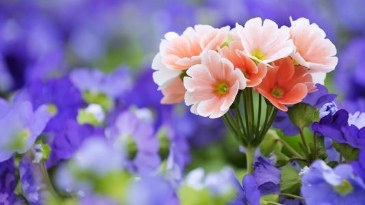 鲜花,丁香,粉红色,领域,宏,花束