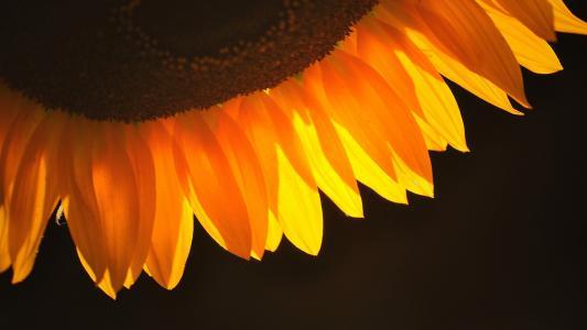 花瓣,壁纸