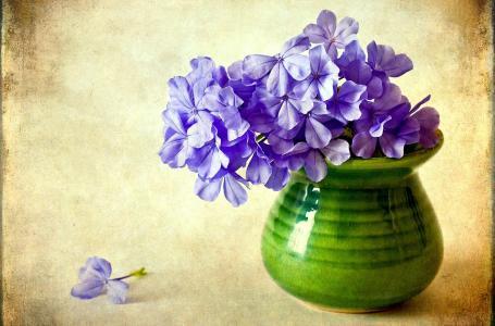 福禄考,鲜花,紫色,花瓶,花卉