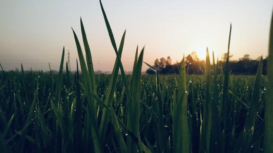 清晨时分嫩绿的小草