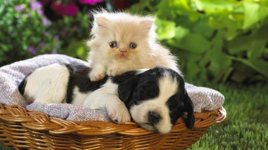 小猫,小狗,朋友