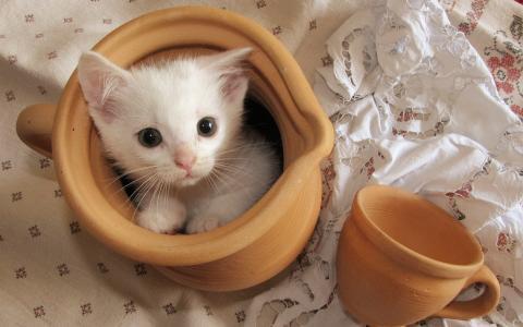 猫,背景,杯子