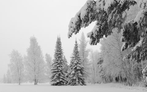 树木,森林,冬天
