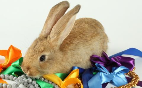 蝴蝶结,珠子,兔子