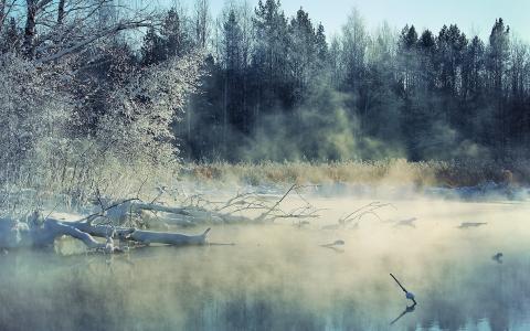 冬天,河,雾,景观