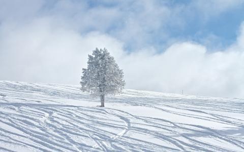冬季,冬季,冬季壁纸,木材,雪