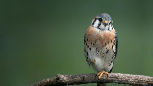 鸟,分支,羽毛