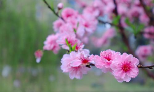艳丽迷人的花朵