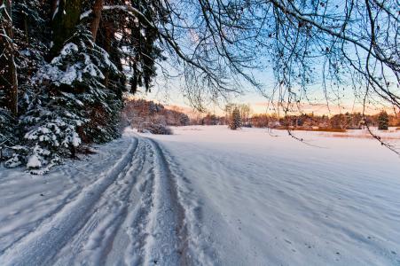 冬天,路,树,景观