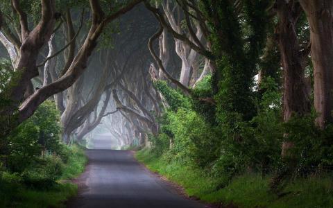 道路,树木,夏天