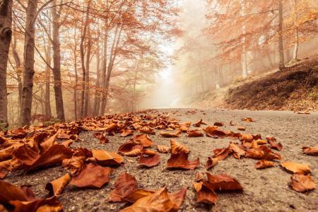 秋天,下降,叶子,落叶,森林