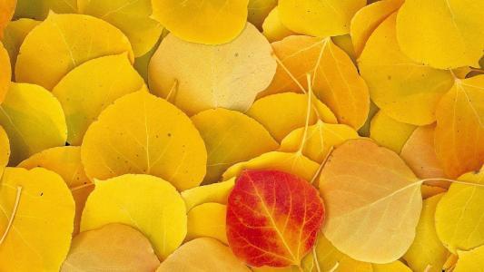 叶子,黄色,红色,叶子,秋天,宏