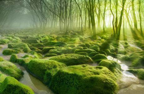 景观,性质,森林,树木,沼泽,水,雾,早上