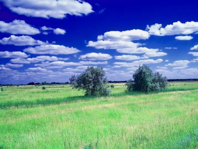 草甸,场,云,景观
