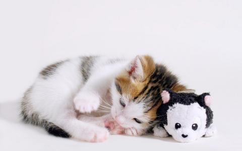 猫,玩具,猫咪,猫,猫,谎言