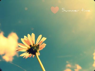 夏天,季节,花卉,天空