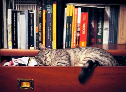 书籍,猫,衣服,衣柜,架子,壁纸