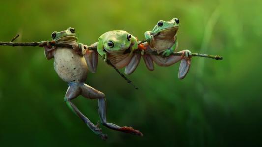 青蛙,上一个,分公司,壁纸