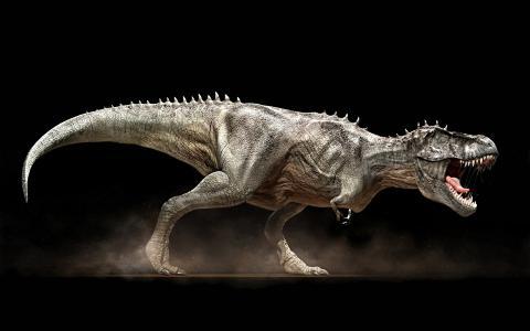 恐龙,嘴巴,f牙,trex