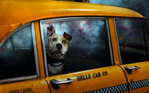 查看,车,朋友,狗