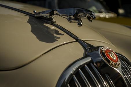 捷豹,会徽,引擎盖,车,米色
