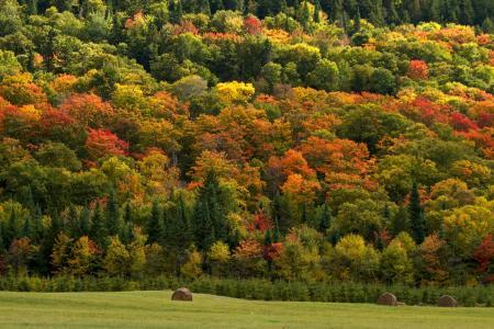 森林,性质,干草,秋季,原野,树木