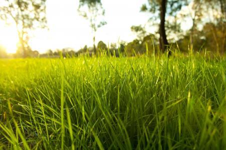 环境,性质,宏,光明,绿色地面,草,农村季节,新鲜的花园,霜