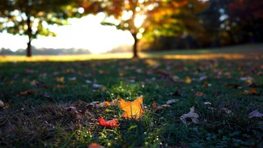 秋天,叶子,草,宏,叶子,秋天,落叶